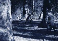 заплаканный цифровой волк картины Стоковые Изображения RF