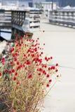 Заплата красных цветков Стоковые Фото