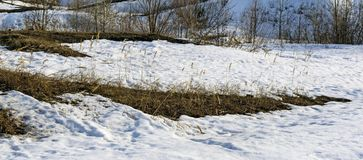 Заплаты таяния весны с кустами и колосками травы ` s last year сухой Стоковое Фото