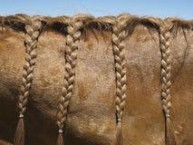 заплетенная грива лошади стоковая фотография rf
