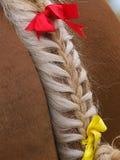 Заплетенный кабель лошади Стоковые Изображения