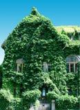 заплетенный плющ дома Стоковое Фото