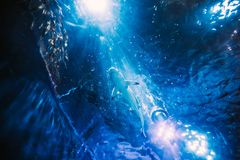 Заплывание акулы в аквариуме Нижний взгляд рыб в движении Стоковое Изображение RF