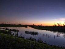 заплывание аллигатора в болоте на заходе солнца Стоковые Изображения RF