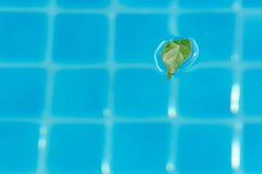 заплывание бассеина листьев Стоковые Изображения RF