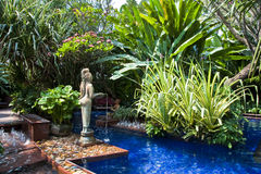 заплывание бассеина тропическое Стоковое Изображение