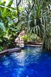 заплывание бассеина тропическое Стоковая Фотография