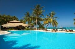 заплывание бассеина тропическое Стоковое Фото