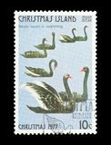 -заплывание 7 лебедей Стоковые Фотографии RF