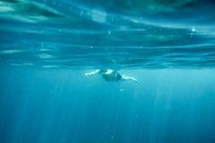 Заплывание человека в голубом океане Стоковое Изображение