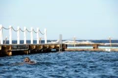 заплывание Стоковые Изображения RF