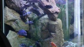 Заплыв рыб в аквариуме акции видеоматериалы