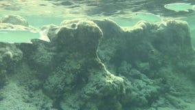 Заплыв рыб около берега видеоматериал