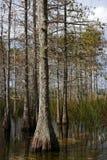 заповедник большого кипариса национальный Стоковая Фотография RF