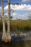 заповедник большого кипариса национальный Стоковое Фото