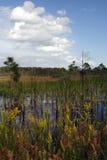 заповедник большого кипариса национальный Стоковое Изображение