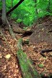 Заповедник Иллинойс леса Rockford роторный Стоковые Фото
