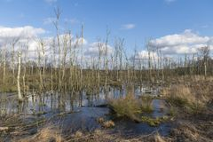 Заповедник Wooldse veen в Winterswijk в Netherland Стоковое Изображение