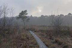Заповедник Wooldse veen в Winterswijk в Netherland Стоковые Фото