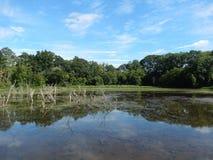 Заповедник живой природы с линией лесного дерева отразил в озере Стоковая Фотография RF