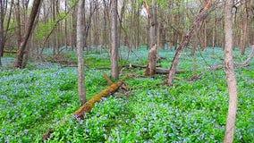 Заповедник Иллинойс леса Oak Ridge сток-видео