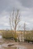 Заповедник Mudflats стоковые фото