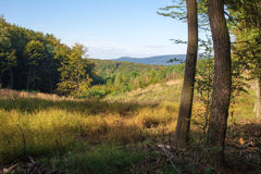 Запоздалый лес лета в немного прикарпатском Стоковое фото RF