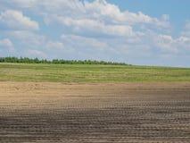 заполированность лужка лошадей сельской местности Стоковые Изображения RF
