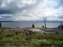 Заполненное Wildflower озеро пляж обозревая с облачным небом Стоковые Фото