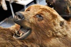 Заполненный головой трофей звероловства медведя Стоковые Изображения