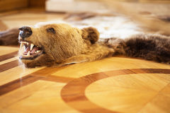 Заполненный медведь на поле Стоковое Изображение
