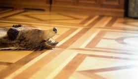 Заполненный медведь на поле Стоковые Фото