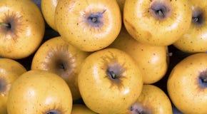 Заполненный план рамки свежих органических золотых яблок Стоковые Фото