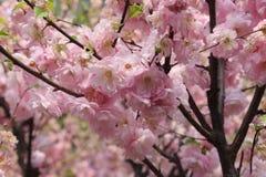 Запрещенное цветение Стоковое Изображение RF