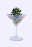 запруженное стекло кактуса Стоковое Изображение RF