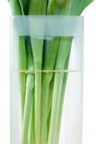запруживает вазу тюльпана Стоковое Фото