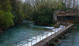 Запруда на малом реке леса Стоковое Фото
