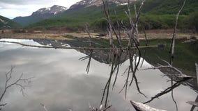 Запрудите бобра дома журнала деревьев пруда сухой в Ushuaia акции видеоматериалы