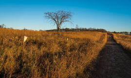 Запустелые дерево и Birdhouse Стоковые Изображения RF