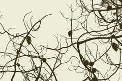 Запутанные ветви Стоковые Фото