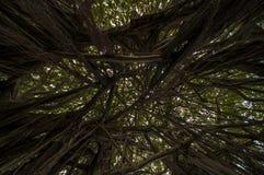 Запутанные ветви Стоковые Изображения RF