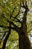 Запутанные деревья осени Стоковая Фотография