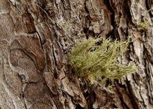 Запутанный мох Стоковое Фото