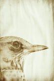 запятнанная ржавчина макроса grunge старая бумажная Стоковое фото RF