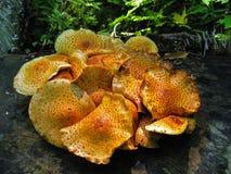 Запятнанные грибы Стоковые Изображения RF