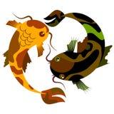 Запятнанные декоративные рыбы танцуя под водой Стоковые Изображения RF