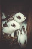 Запятнанные зайчики хотят выйти клетки Стоковая Фотография RF