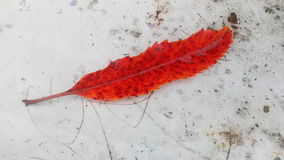 Запятнанные лист Стоковое Фото