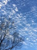 Запятнанные облака против неба Каролины голубого Стоковая Фотография RF
