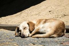 Запятнанные сны собаки имбиря сладостно на том основании стоковые фото